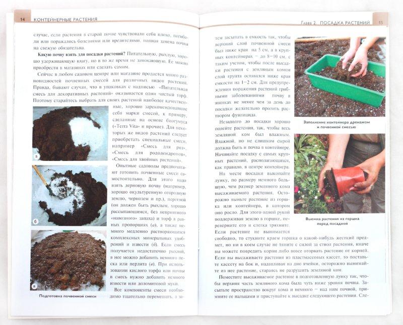 Иллюстрация 1 из 22 для Контейнерные растения - Елена Колесникова | Лабиринт - книги. Источник: Лабиринт