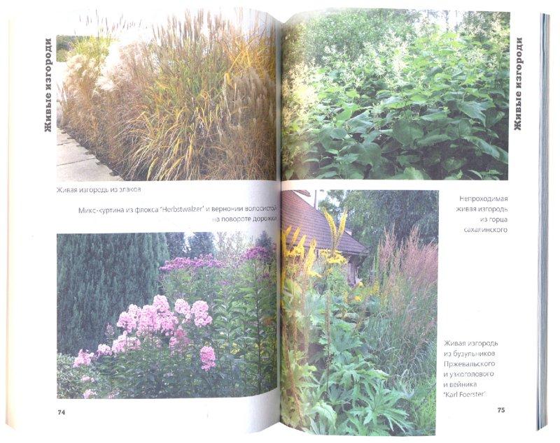 Иллюстрация 1 из 34 для Многолетние цветы в дизайне сада: Эффектные гиганты - Светлана Воронина | Лабиринт - книги. Источник: Лабиринт