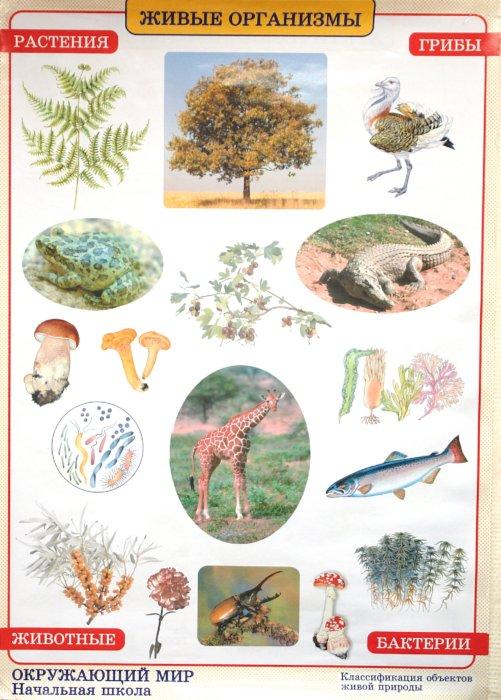 Иллюстрация 1 из 2 для Окружающий мир. Живые организмы. Природные зоны - Плешаков, Яременко | Лабиринт - книги. Источник: Лабиринт