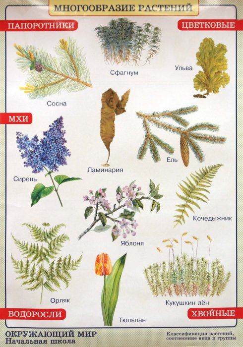 Иллюстрация 1 из 2 для Окружающий мир. Многообразие растений. Природные зоны. Степь - Плешаков, Яременко | Лабиринт - книги. Источник: Лабиринт