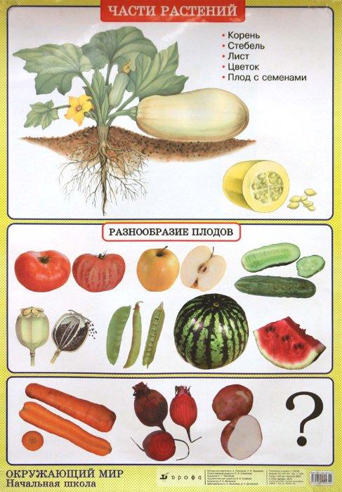 Иллюстрация 1 из 2 для Окружающий мир. Части растений. Природные зоны. Тундра - Плешаков, Яременко | Лабиринт - книги. Источник: Лабиринт