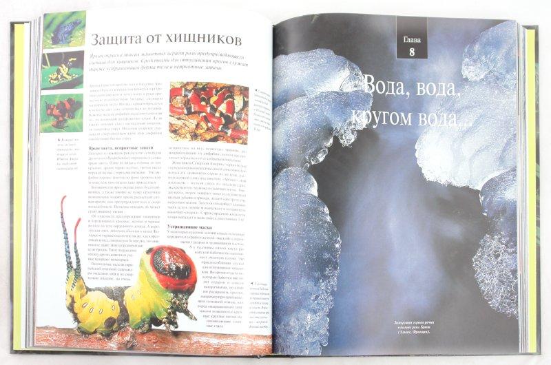 Иллюстрация 1 из 14 для Удивительная жизнь природы - Альбуи, Дане, Буске | Лабиринт - книги. Источник: Лабиринт