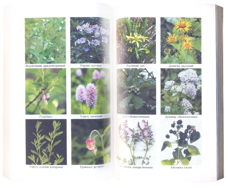 Иллюстрация 1 из 8 для Лечение лекарственными растениями - Галина Лавренова | Лабиринт - книги. Источник: Лабиринт
