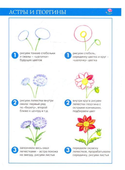 Иллюстрация 1 из 8 для Садовые цветы. Рисование красками - Ирина Лыкова   Лабиринт - книги. Источник: Лабиринт