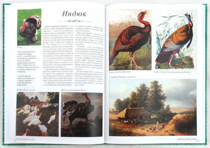 Иллюстрация 1 из 24 для Самые красивые птицы. Иллюстрированная энциклопедия   Лабиринт - книги. Источник: Лабиринт