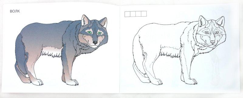 Иллюстрация 1 из 12 для Дикие животные России | Лабиринт - книги. Источник: Лабиринт