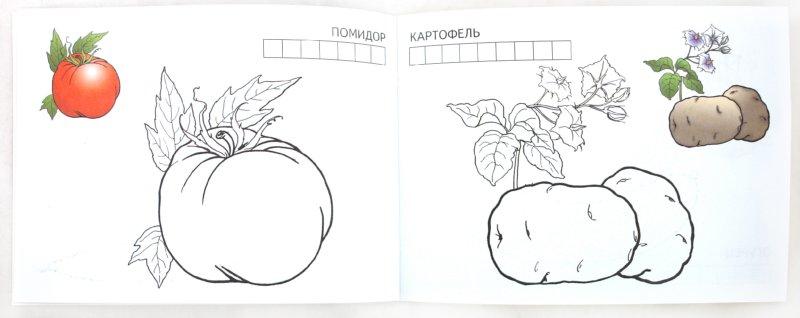 Иллюстрация 1 из 9 для Овощи | Лабиринт - книги. Источник: Лабиринт