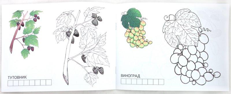Иллюстрация 1 из 20 для Ягоды | Лабиринт - книги. Источник: Лабиринт
