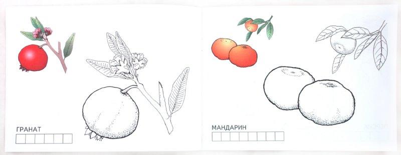 Иллюстрация 1 из 25 для Фрукты | Лабиринт - книги. Источник: Лабиринт