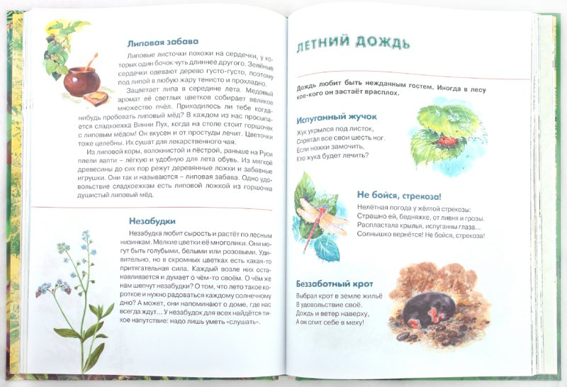Иллюстрация 1 из 22 для Сказки леса. 1-4 классы - Александр Тихонов | Лабиринт - книги. Источник: Лабиринт
