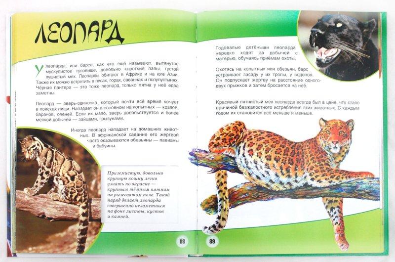 Иллюстрация 1 из 21 для Животные - Игорь Павлинов | Лабиринт - книги. Источник: Лабиринт