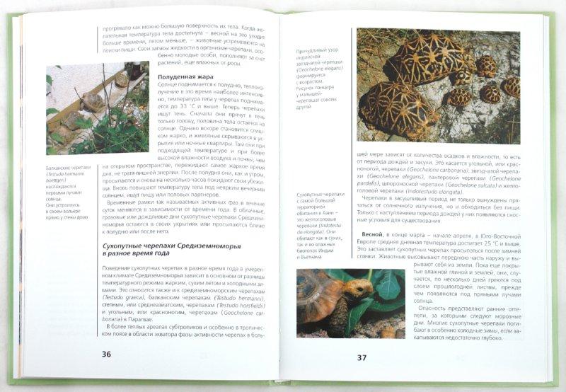 Иллюстрация 1 из 36 для Сухопутные черепахи - Райнер Прашага | Лабиринт - книги. Источник: Лабиринт