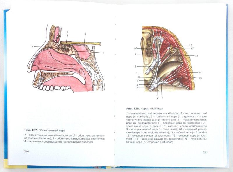 Иллюстрация 1 из 4 для Атлас анатомии человека - Галина Голубкова   Лабиринт - книги. Источник: Лабиринт