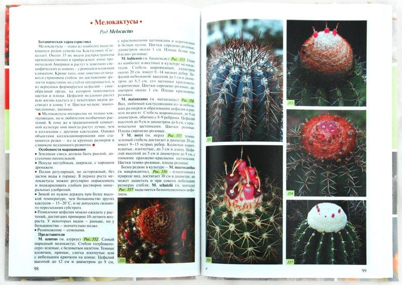 Иллюстрация 1 из 5 для Кактусы и декоративные суккуленты. Атлас-определитель - Дмитрий Семенов | Лабиринт - книги. Источник: Лабиринт