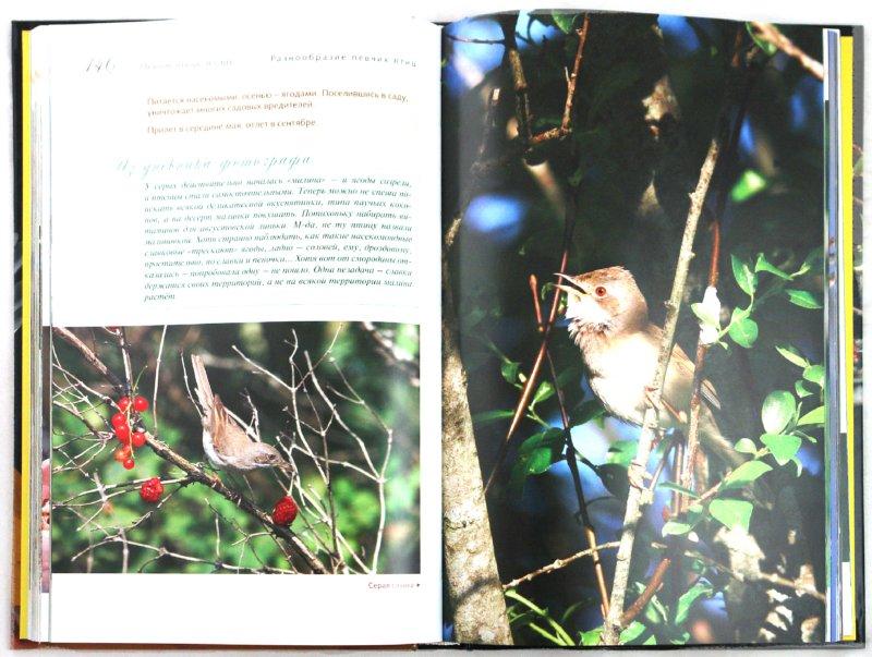 Иллюстрация 1 из 14 для Певчие птицы - Митителло, Хромушин | Лабиринт - книги. Источник: Лабиринт