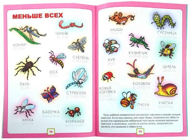 Иллюстрация 1 из 18 для Животные | Лабиринт - книги. Источник: Лабиринт