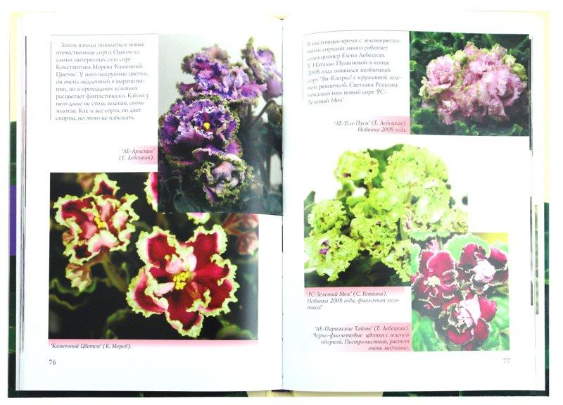 Иллюстрация 1 из 9 для Узамбарские фиалки - Зубо, Андреева | Лабиринт - книги. Источник: Лабиринт