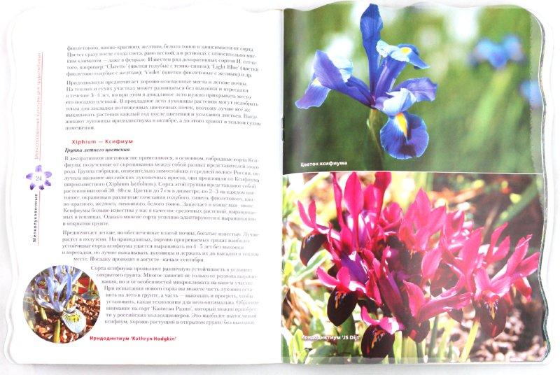 Иллюстрация 1 из 10 для Крокусы, нарциссы и другие мелколуковичные цветы - Юлия Попова | Лабиринт - книги. Источник: Лабиринт