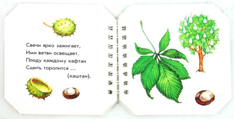 Иллюстрация 1 из 13 для Что в парке растёт - А. Геращенко | Лабиринт - книги. Источник: Лабиринт