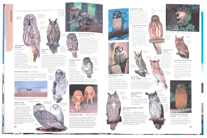 Иллюстрация 1 из 11 для 1500 самых удивительных птиц   Лабиринт - книги. Источник: Лабиринт