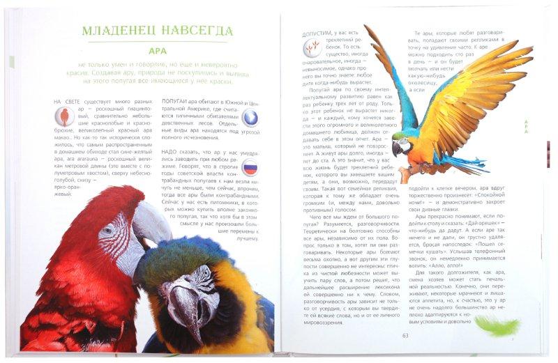 Иллюстрация 1 из 9 для Неведомы зверюшки - Ольга Волкова   Лабиринт - книги. Источник: Лабиринт