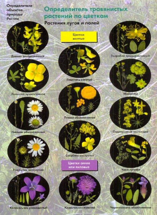 Иллюстрация 1 из 5 для Определитель травянистых растений по цветкам. Растения лугов и полей - Боголюбов, Лазарева, Васюкова   Лабиринт - книги. Источник: Лабиринт