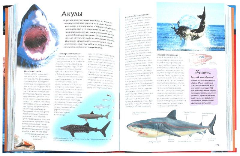 Иллюстрация 1 из 37 для Море - Кос, Пьянтанида   Лабиринт - книги. Источник: Лабиринт