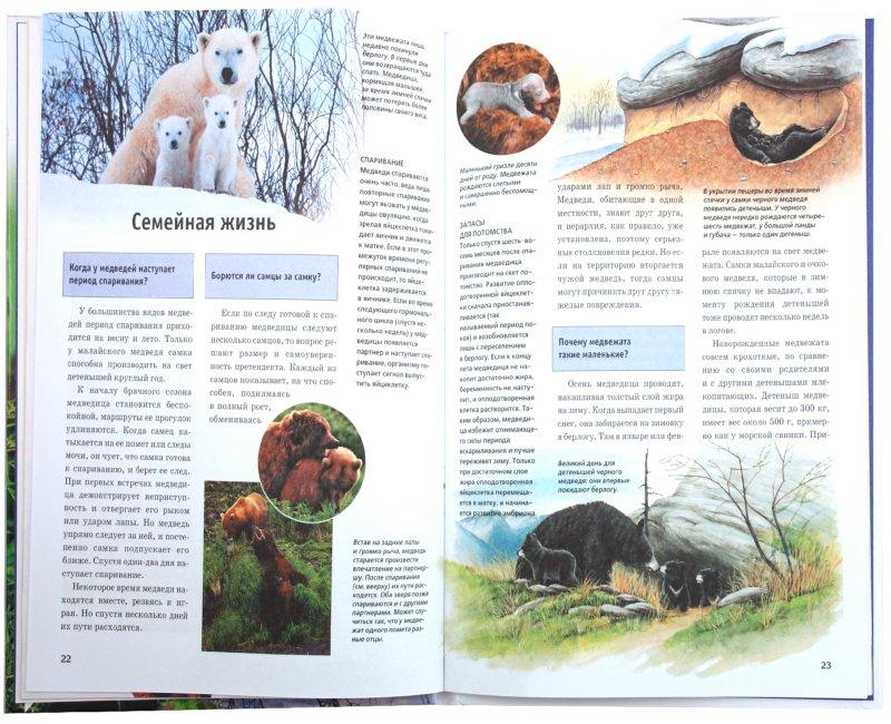 Иллюстрация 1 из 16 для Медведи - Удо Ганслоссер   Лабиринт - книги. Источник: Лабиринт