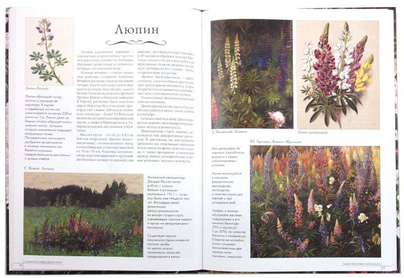 Иллюстрация 1 из 45 для Самые красивые цветы мира | Лабиринт - книги. Источник: Лабиринт