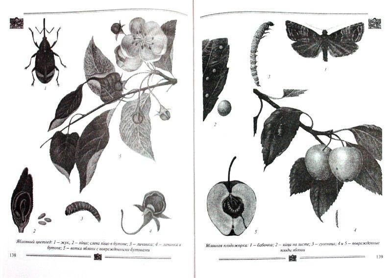 Иллюстрация 1 из 4 для Книга садовода: от выбора участка до сбора урожая - Чухляев, Деменко | Лабиринт - книги. Источник: Лабиринт