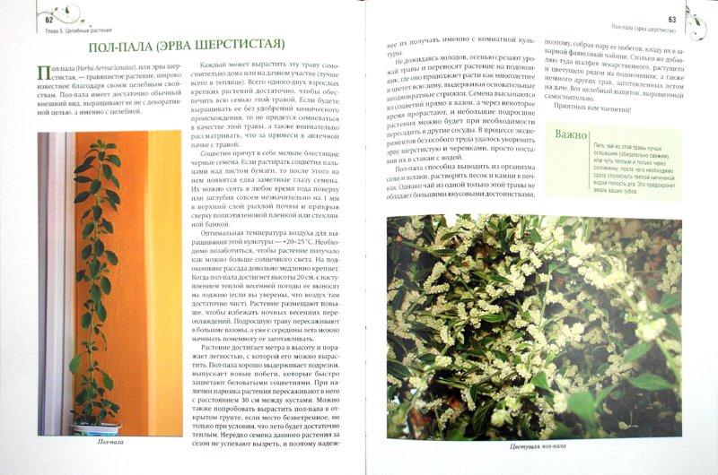 Иллюстрация 1 из 17 для Комнатные растения дарят здоровье - Николай Азарушкин   Лабиринт - книги. Источник: Лабиринт
