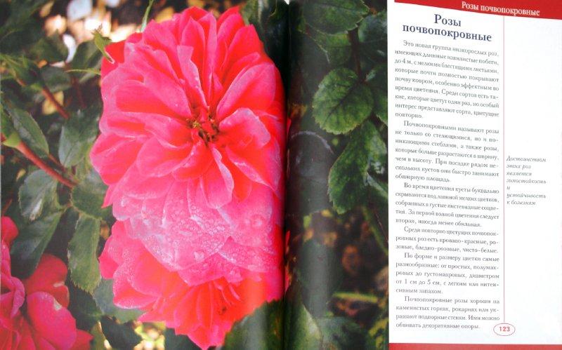Иллюстрация 1 из 10 для Розы. Иллюстрированный каталог. Сорта, разведение, уход - Любовь Мовсесян | Лабиринт - книги. Источник: Лабиринт