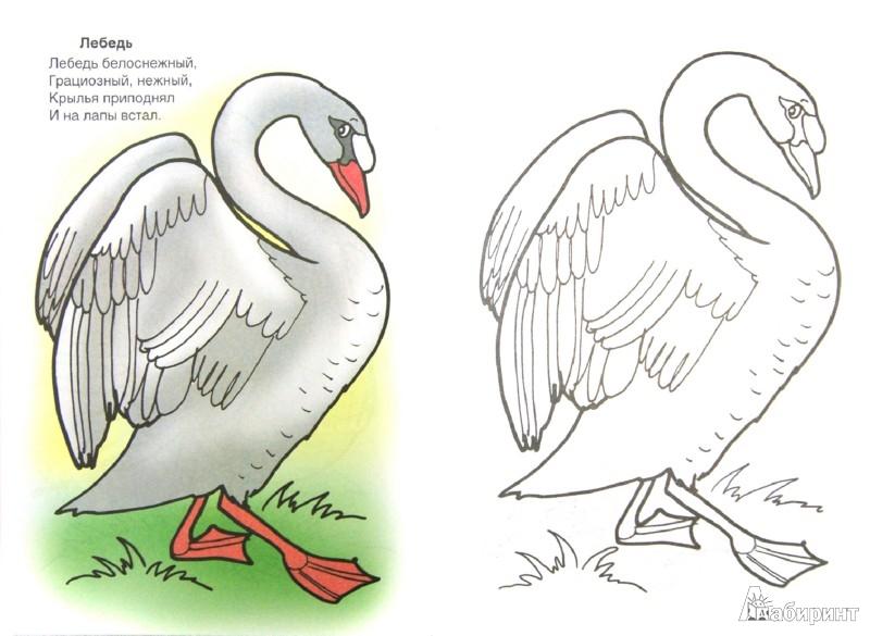 Иллюстрация 1 из 9 для Птичий двор - Скребцова, Лопатина | Лабиринт - книги. Источник: Лабиринт