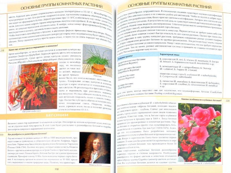 Иллюстрация 1 из 6 для Все о комнатных растениях в вопросах и ответах - Ван, Неер | Лабиринт - книги. Источник: Лабиринт