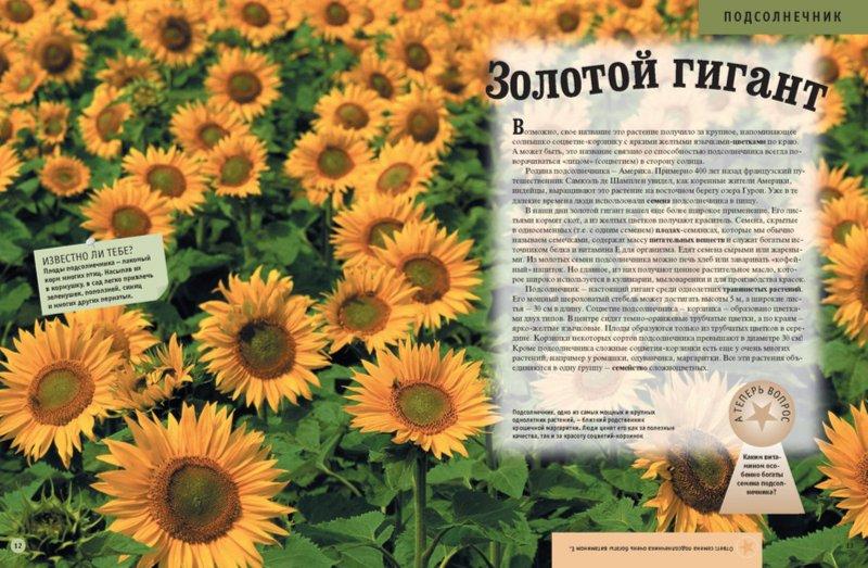 Иллюстрация 1 из 32 для Энциклопедия для детей. Растения. Животные | Лабиринт - книги. Источник: Лабиринт