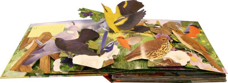 Иллюстрация 1 из 6 для Птицы - Вэл Дейвис   Лабиринт - книги. Источник: Лабиринт