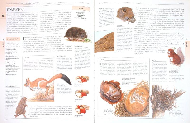 Иллюстрация 1 из 21 для Жизнь животных в ярких картинках и интересных фактах - Джойс Поуп | Лабиринт - книги. Источник: Лабиринт