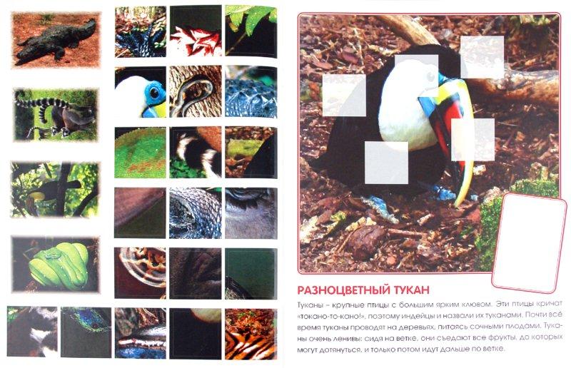 Иллюстрация 1 из 2 для Кто живет в джунглях. Книга с наклейками - Е. Краснушкина | Лабиринт - книги. Источник: Лабиринт