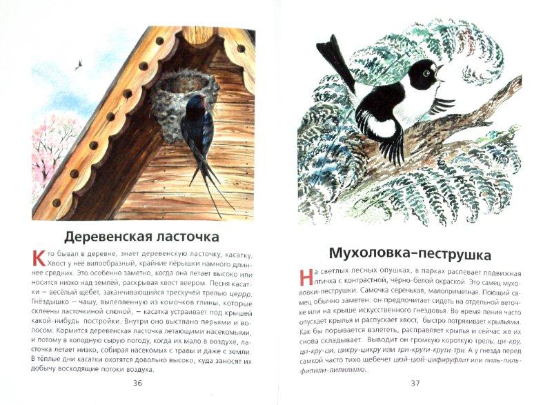 Иллюстрация 1 из 34 для Животные нашей страны - Владимир Храбрый | Лабиринт - книги. Источник: Лабиринт