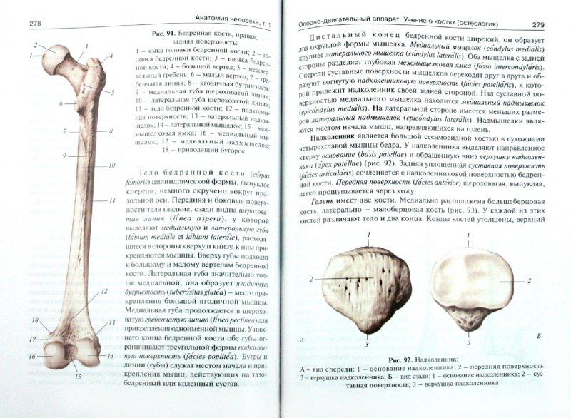 Иллюстрация 1 из 16 для Анатомия человека: учебник в 3-х томах. Том 1 - Сапин, Билич | Лабиринт - книги. Источник: Лабиринт