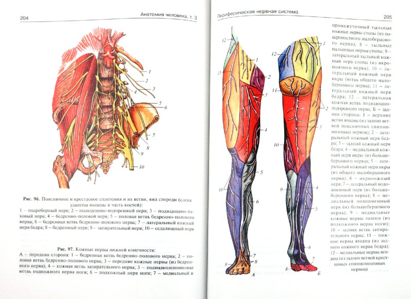 Иллюстрация 1 из 22 для Анатомия человека: учебник в 3-х томах. Том 3 - Сапин, Билич | Лабиринт - книги. Источник: Лабиринт