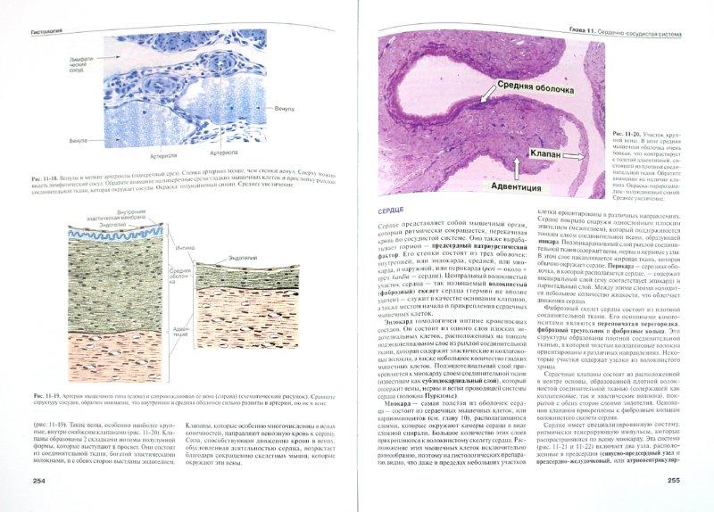 Иллюстрация 1 из 16 для Гистология. Атлас - Жункейра, Карнейро | Лабиринт - книги. Источник: Лабиринт