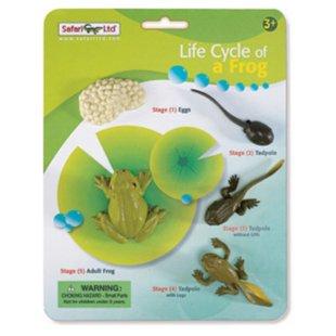 Иллюстрация 1 из 6 для Набор жизненный цикл лягушки (269129)   Лабиринт - игрушки. Источник: Лабиринт