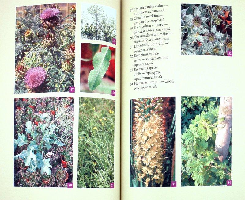 Иллюстрация 1 из 14 для Райский сад на дачном участке. Самые красивые растения, неприхотливые в уходе - Александр Хаиль   Лабиринт - книги. Источник: Лабиринт