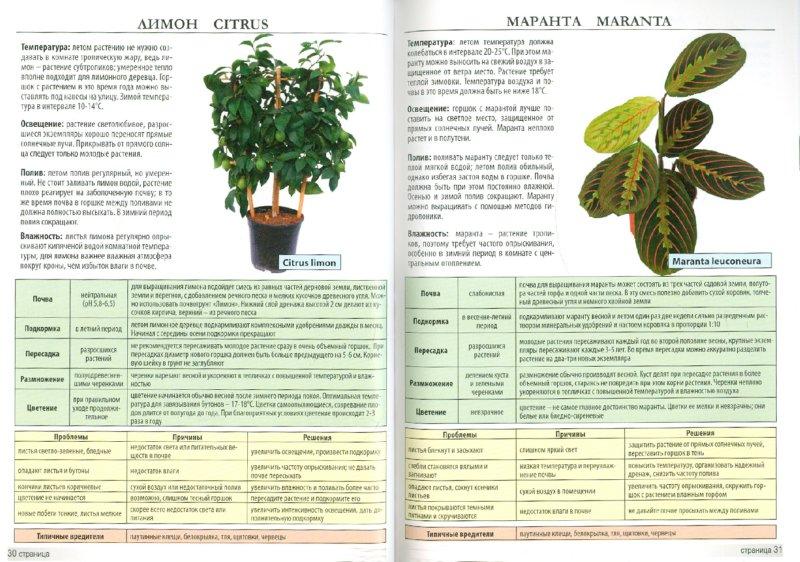 Иллюстрация 1 из 4 для Мини-энциклопедия. Комнатные растения | Лабиринт - книги. Источник: Лабиринт