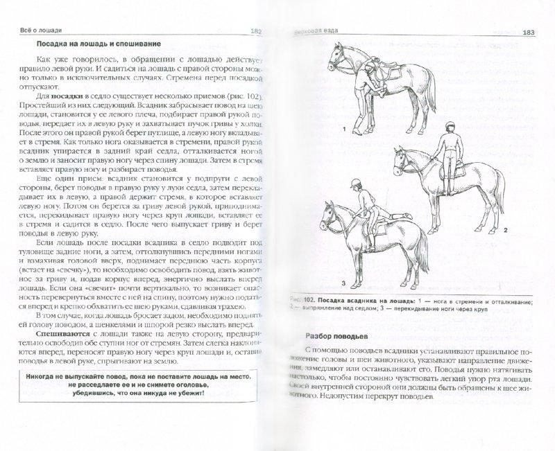 Иллюстрация 1 из 12 для Все о лошади. Породы и выбор. Уход и лечение. Снаряжение и езда - Ливанова, Ливанова | Лабиринт - книги. Источник: Лабиринт
