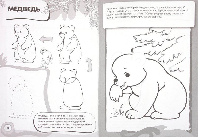 Иллюстрация 1 из 11 для Рисуем и раскрашиваем лесные животные | Лабиринт - книги. Источник: Лабиринт