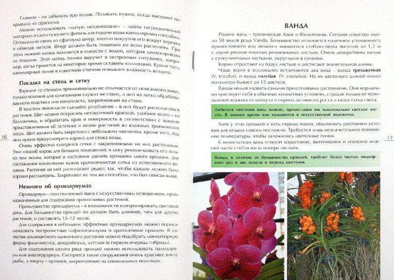 Иллюстрация 1 из 8 для Секреты ухода за орхидеями - Александр Зайцев | Лабиринт - книги. Источник: Лабиринт