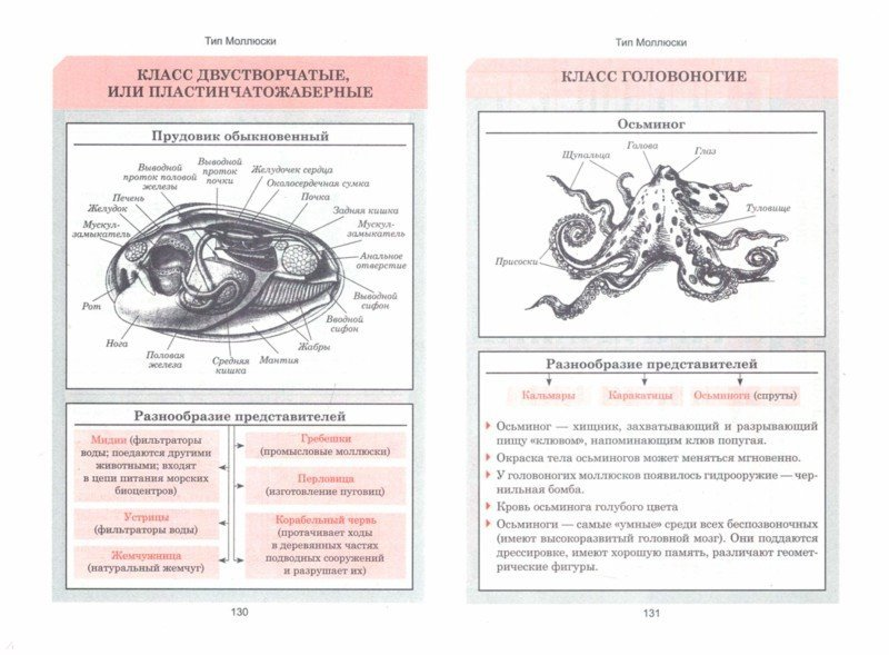 Иллюстрация 1 из 38 для Биология. Весь школьный курс в таблицах | Лабиринт - книги. Источник: Лабиринт