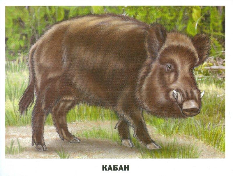 Иллюстрация 1 из 30 для Обучающие карточки. Животные России   Лабиринт - книги. Источник: Лабиринт